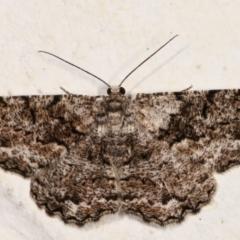 Unplaced externaria (Mahogany Bark Moth) at Melba, ACT - 11 Mar 2021 by kasiaaus