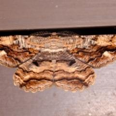 Scioglyptis lyciaria (White-patch Bark Moth) at Florey, ACT - 16 Mar 2021 by Kurt