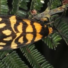 Asura lydia (Lydia Lichen Moth) at Majura, ACT - 16 Mar 2021 by jbromilow50