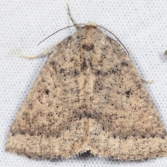 Unidentified Moth (Lepidoptera) (TBC) at Tidbinbilla Nature Reserve - 12 Mar 2021 by kasiaaus