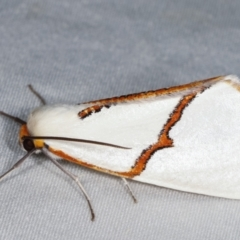 Thalaina selenaea (Orange-rimmed Satin Moth) at Tidbinbilla Nature Reserve - 12 Mar 2021 by kasiaaus