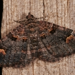 Epyaxa sodaliata (A geometer moth) at Melba, ACT - 7 Mar 2021 by kasiaaus