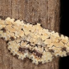 Sandava scitisignata (A noctuid moth) at Melba, ACT - 8 Mar 2021 by kasiaaus