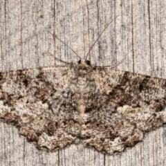Unplaced externaria (Mahogany Bark Moth) at Melba, ACT - 8 Mar 2021 by kasiaaus