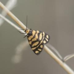 Asura lydia (Lydia Lichen Moth) at The Pinnacle - 15 Mar 2021 by AlisonMilton