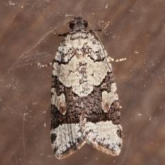 Meritastis lythrodana (A tortrix or leafroller moth) at Melba, ACT - 9 Mar 2021 by kasiaaus