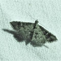Metasia capnochroa (Smokey Metasia Moth) at Tidbinbilla Nature Reserve - 12 Mar 2021 by JohnBundock