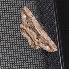 Scioglyptis lyciaria (White-patch Bark Moth) at Higgins, ACT - 18 Mar 2021 by AlisonMilton