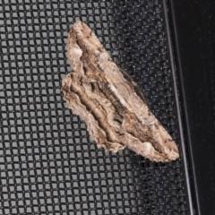 Scioglyptis lyciaria (White-patch Bark Moth) at Higgins, ACT - 18 Mar 2021 by AlisonMilton