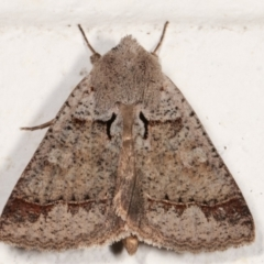 Pantydia sparsa ( A noctuid moth) at Melba, ACT - 13 Mar 2021 by kasiaaus