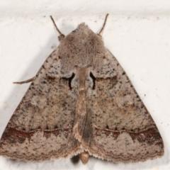 Pantydia sparsa ( A noctuid moth) at Melba, ACT - 13 Mar 2021 by kasiaaus