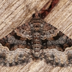 Epyaxa subidaria (Subidaria Moth) at Melba, ACT - 14 Mar 2021 by kasiaaus