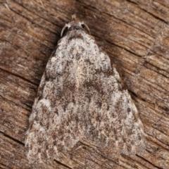 Nola (genus) (A Noctuid moth) at Melba, ACT - 15 Mar 2021 by kasiaaus