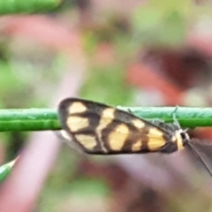 Asura lydia (Lydia Lichen Moth) at Dryandra St Woodland - 22 Mar 2021 by tpreston