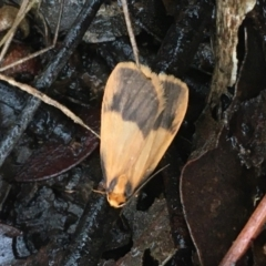 Threnosia heminephes (Halved Footman) at Dryandra St Woodland - 22 Mar 2021 by Ned_Johnston