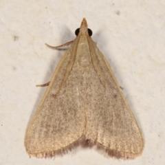 Ocrasa albidalis (A Pyralid moth) at Melba, ACT - 17 Mar 2021 by kasiaaus
