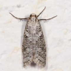 Lepidoscia (genus) (Unidentified cone case moth) at Melba, ACT - 21 Mar 2021 by kasiaaus