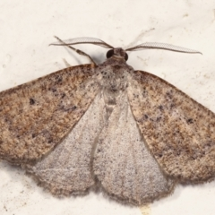 Amelora anepiscepta (Reddish Cape-moth) at Melba, ACT - 22 Mar 2021 by kasiaaus