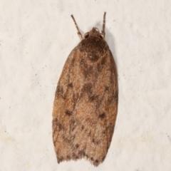 Garrha repandula (A Concealer moth) at Melba, ACT - 22 Mar 2021 by kasiaaus