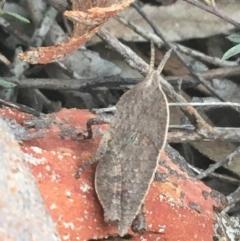 Goniaea australasiae (Gumleaf grasshopper) at Dryandra St Woodland - 26 Mar 2021 by Ned_Johnston
