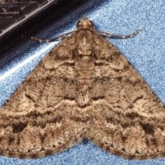 Lipogya eutheta (Grey Bark Moth) at Melba, ACT - 23 Mar 2021 by kasiaaus