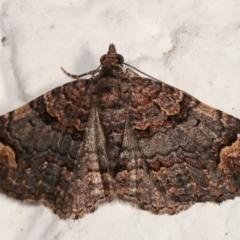 Epyaxa sodaliata (A geometer moth) at Melba, ACT - 24 Mar 2021 by kasiaaus