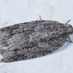 Acropolitis ergophora (A tortrix or leafroller moth) at Melba, ACT - 25 Mar 2021 by kasiaaus