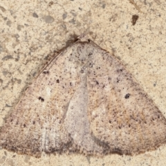Amelora anepiscepta (Reddish Cape-moth) at Melba, ACT - 29 Mar 2021 by kasiaaus