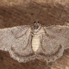 Psilosticha absorpta (Fine-waved Bark Moth) at Melba, ACT - 30 Mar 2021 by kasiaaus