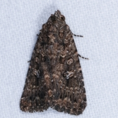 Condica aroana (A Noctuoid moth) at Melba, ACT - 31 Mar 2021 by kasiaaus