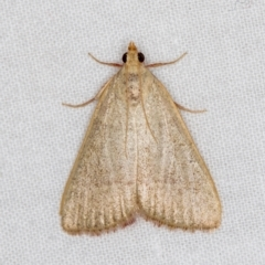 Ocrasa albidalis (A Pyralid moth) at Melba, ACT - 3 Mar 2021 by Bron