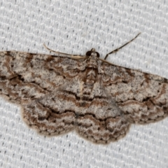 Didymoctenia exsuperata (Thick-lined Bark Moth) at Melba, ACT - 10 Mar 2021 by Bron