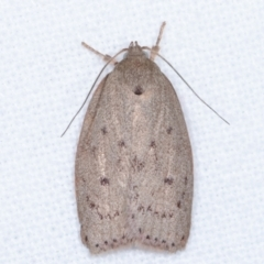 Heliocausta undescribed species (A concealer moth) at Melba, ACT - 3 Apr 2021 by kasiaaus