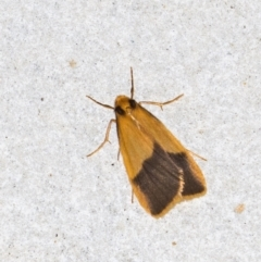 Threnosia heminephes (Halved Footman) at Melba, ACT - 10 Mar 2021 by Bron