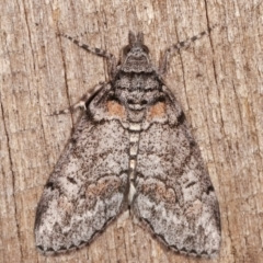 Smyriodes trigramma (Stippled Line-moth) at Melba, ACT - 3 Apr 2021 by kasiaaus