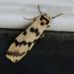 Tigrioides alterna (Alternating Footman) at Googong, NSW - 9 Apr 2021 by WHall