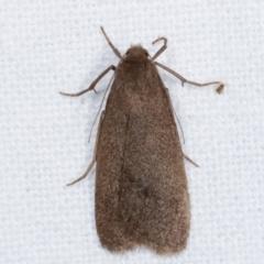 Threnosia myochroa (A moth) at Melba, ACT - 8 Apr 2021 by kasiaaus