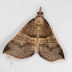 Anachloris uncinata (Hook-winged Carpet) at Melba, ACT - 30 Mar 2021 by Bron