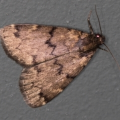Mormoscopa phricozona (A Herminiid Moth) at Melba, ACT - 30 Mar 2021 by Bron