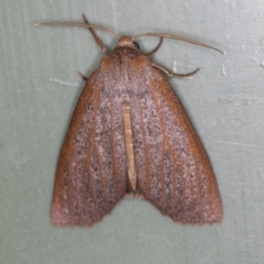 Paralaea porphyrinaria (Chestnut-veined Crest-moth) at Melba, ACT - 30 Mar 2021 by Bron