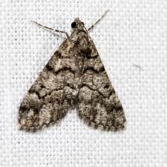 Lipogya exprimataria (Jagged Bark Moth) at Black Mountain - 8 Apr 2019 by AlisonMilton