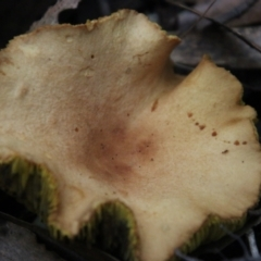 Unidentified Fungus (TBC) at Moruya, NSW - 8 Apr 2021 by LisaH