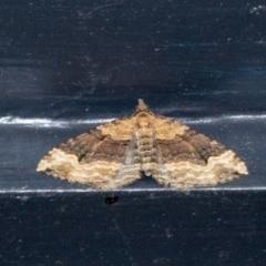 Epyaxa subidaria (Subidaria Moth) at Higgins, ACT - 17 Apr 2021 by AlisonMilton