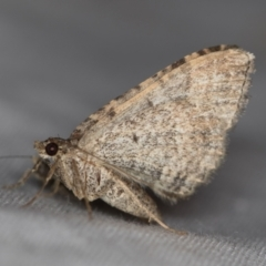 Larentiinae (subfamily) (A geometer moth) at Melba, ACT - 24 Jan 2021 by Bron