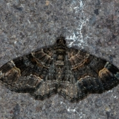 Epyaxa sodaliata (A geometer moth) at Melba, ACT - 22 Jan 2021 by Bron