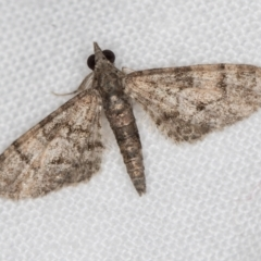 Chloroclystis metallospora (A Geometer moth (Larentiinae)) at Melba, ACT - 22 Jan 2021 by Bron