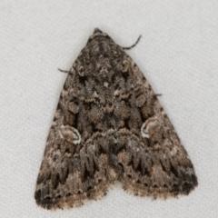 Condica aroana (A Noctuoid moth) at Melba, ACT - 22 Jan 2021 by Bron