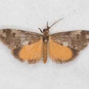 Anestia (genus) at Melba, ACT - 22 Jan 2021