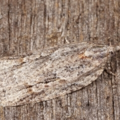 Acropolitis rudisana (A leafroller moth) at Melba, ACT - 17 Apr 2021 by kasiaaus