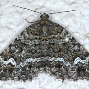Chrysolarentia gypsomela at Ainslie, ACT - 16 Apr 2021